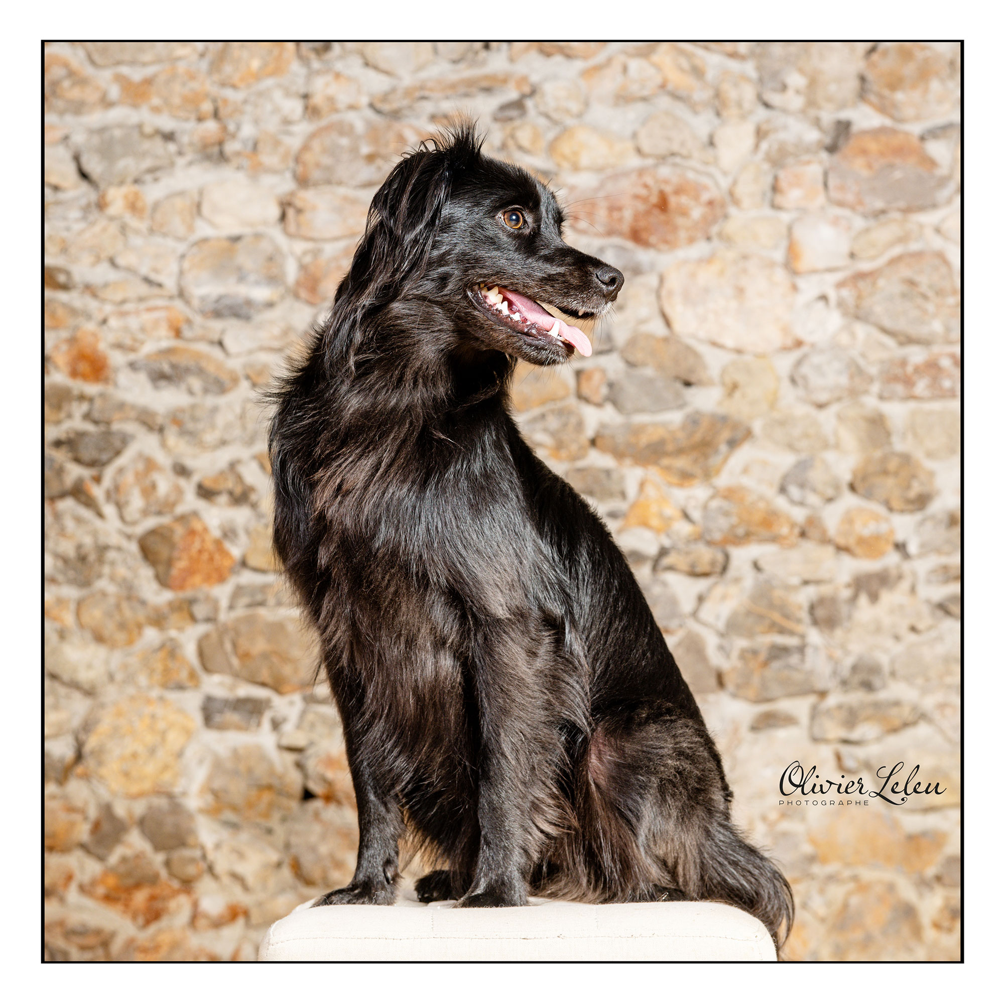 portrait-chien-studio-shooting-photo-animal-compagnie